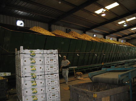 Hendrix Produce   Storage Bins